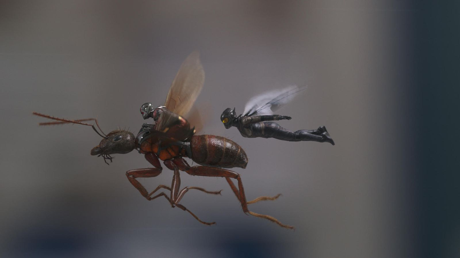 ant-man-wasp-marvel-press-6.jpg (56.18 Kb)